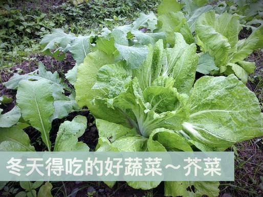 冬天得吃的好蔬菜~芥菜