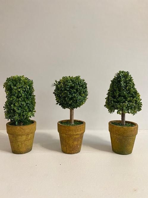 Topiary in Pot | Set of 3