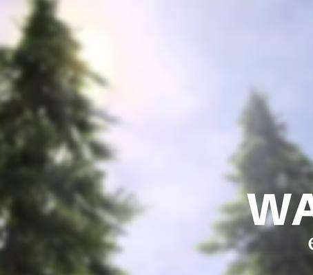 Walking Trees…