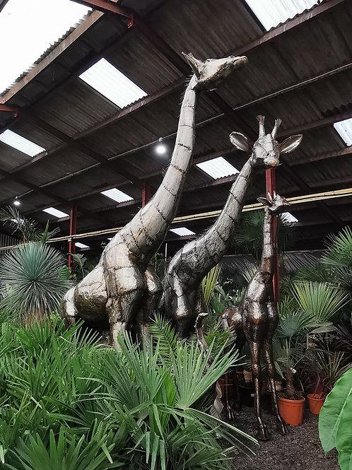 Large Bespoke Metal Giraffe Sculptures