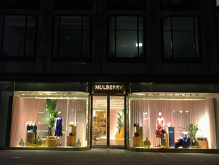 Stunning Strelitzia Plants for 'Mulberry'  Flagship Stores