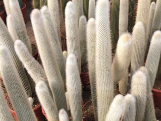 Cactus Update