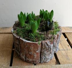 Planted Arrangement.