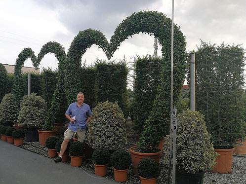 Large Garden Foliage Archway. Heart Shaped