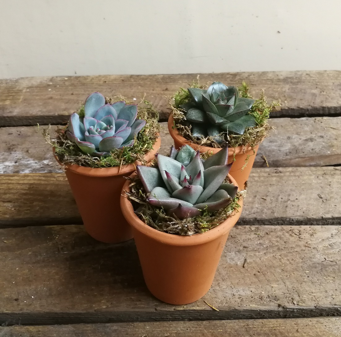 Small succulent planters by Flower Desig