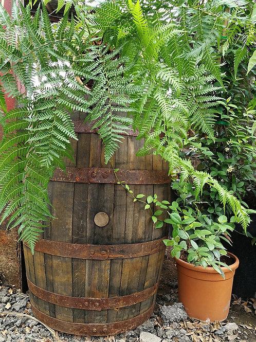 Genuine Oak Whiskey Barrels for Sale