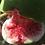 Sweet fruit fig trees