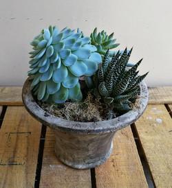 Succulent Planter.