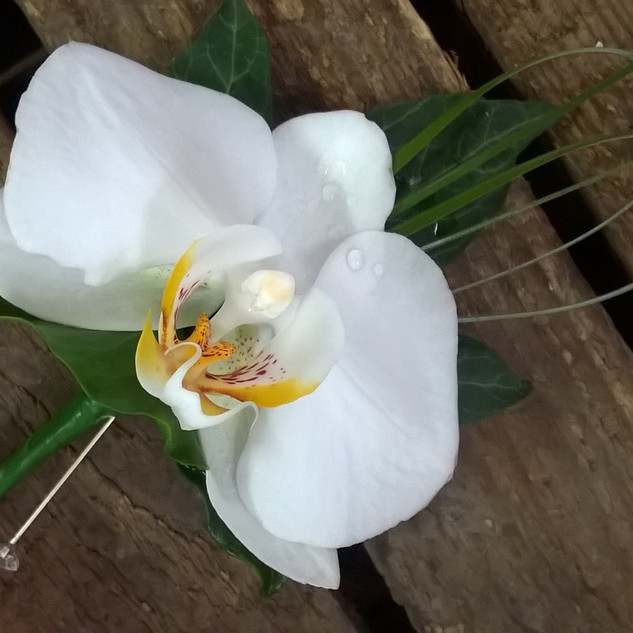 White Phalaenopsis Orchid Buttonhole