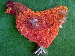 Brown Hen Tribute
