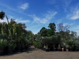 A Massive Amount Of Palm Trees, Olive Trees, Cacti, Agaves Bamboo and Yuccas Have Arrived!