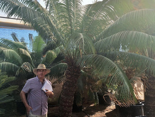 Back from Sourcing Palms and Plants for 2018