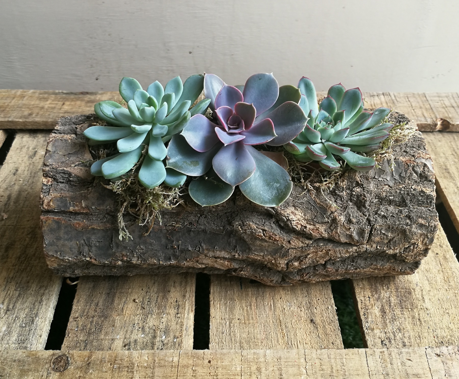 Planted Succulents