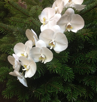 Decorate your real Christmas tree with live flowers!