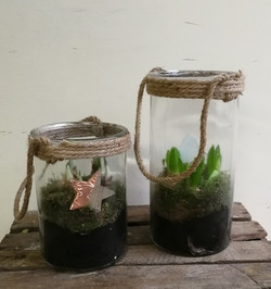 Hyacinth Planters