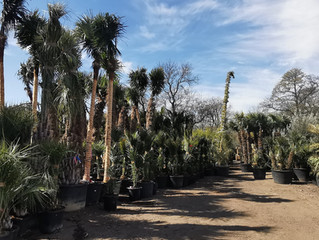 15-20 More Wagons Of Palms, Olive Trees and Amazing Plants On Their Way Soon!