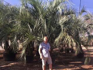 Palm Tree Sourcing