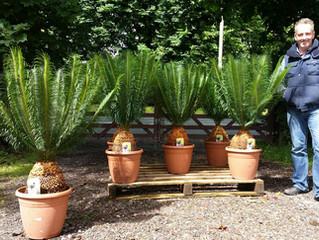 More Amazing Palms