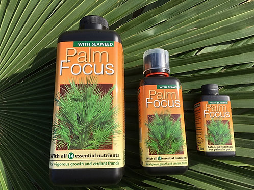 Palm Focus Fertiliser. Free UK Postage.