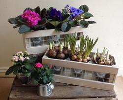 Planted Arrangements