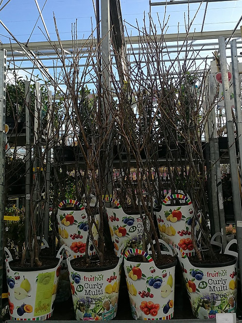 Mixed Variety fruit Trees. 4 in 1 Fruit trees, Cherry, Apple, Plum and Pear.