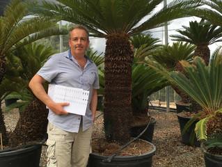 Amazing Specimen Cycas Revoluta