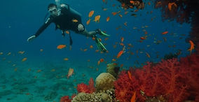 Diving Day Trip in Hurghada