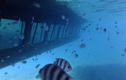 Seascope Semi Submarine