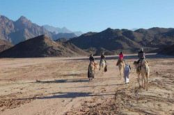 our-camel-ride-in-the-desert-photo_10011