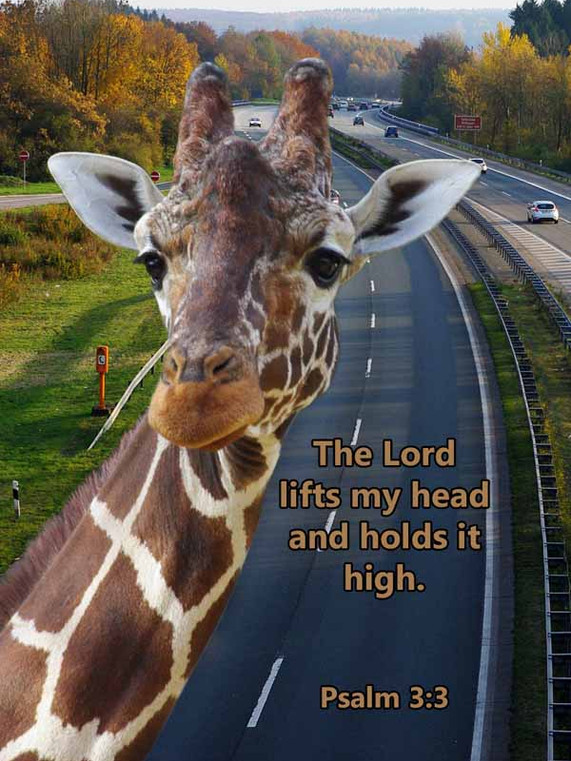 The Lord holds my head high Psalm 3_3LR.