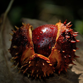 Things to Do With Chestnuts