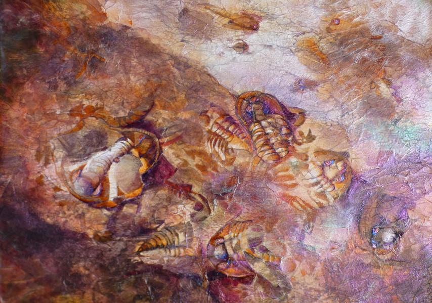 Alison Worsnop- Trilobites