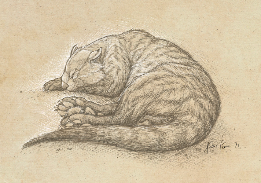 Nellie Pease- Thylacoleo carnifex: Lion Around
