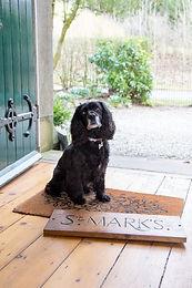 a dog friendly welcome.jpg