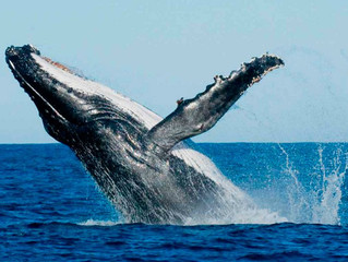 Bailando con ballenas