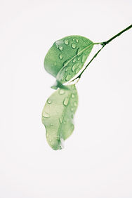 photography-of-wet-green-leaves-1650627.