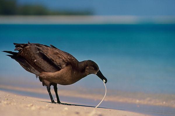birds-plastic.ngsversion.1478626635714.j