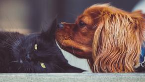 HAY QUE DARLE PRIORIDAD A LOS CASOS DE ABUSO ANIMAL