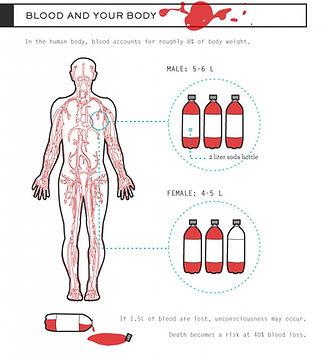 04 - Cuanta Sangre tiene el cuerpo human