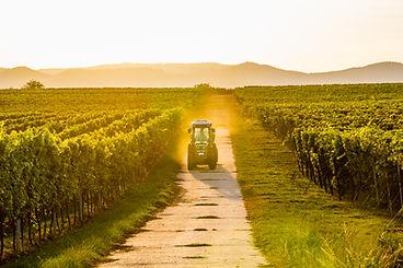vineyard E&o 3.jpg
