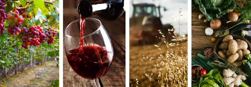 vineyard snip 2.png
