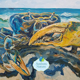 Marine Wildlife Painting