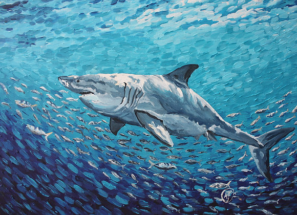 Shark and fish fine art paper