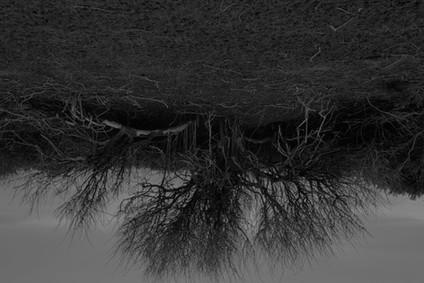 20120427-04_Flor Maesen-3.jpg