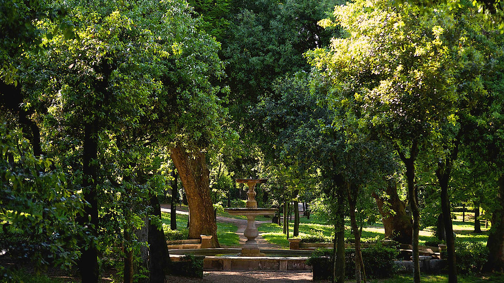 The beautiful art of nature photographed by Giulio D'Ercole during a Villa Borghese and Posh areas photo tour. Rome Photo Fun Tours
