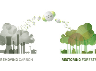 Why not for profit carbon offsets are thriving