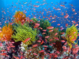 Scathing report prompts changes to reef programs