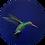Thumbnail: Hummingbird on Navy