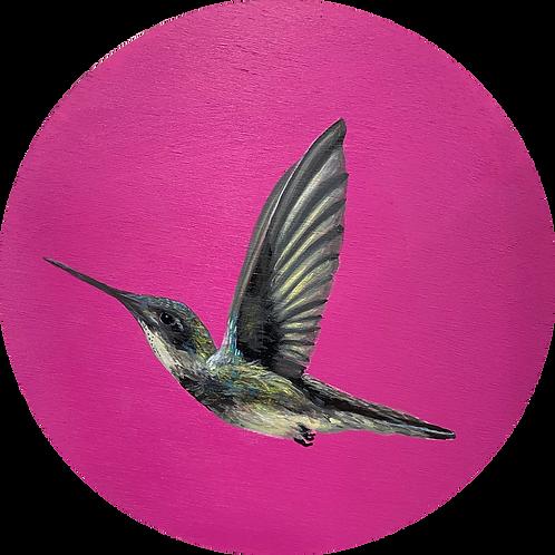 Hummingbird on Pink