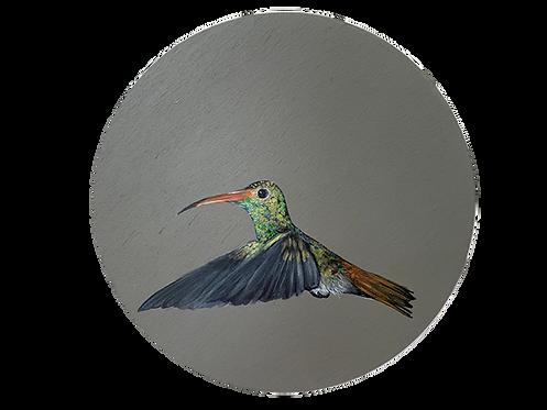 Hummingbird on Grey